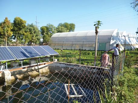 Supply & Installation Of Solar Submersible Pumps For AED At Tarnab Peshawar, Khyber Pukhtun Khwa (KPK)